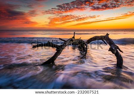 Tree and waves in the Atlantic Ocean at sunrise at Driftwood Beach, Jekyll Island, Georgia. - stock photo