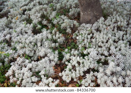 tree and white flower in summer - stock photo