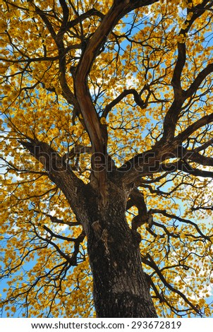 Tree and yellow flowers - stock photo