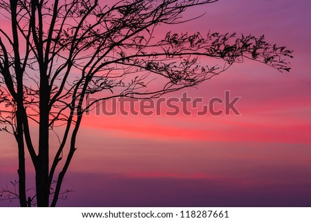 Tree at dawn with rays of the sun - stock photo