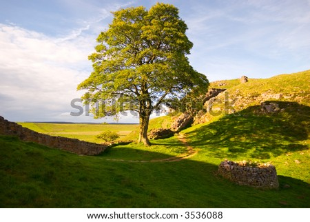 Tree at Hadrian's Wall