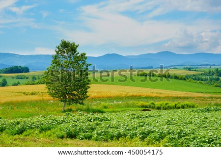 Tree at left of  frame with wheat meadow other field and blue sky in Biei, Hokkaido, Japan