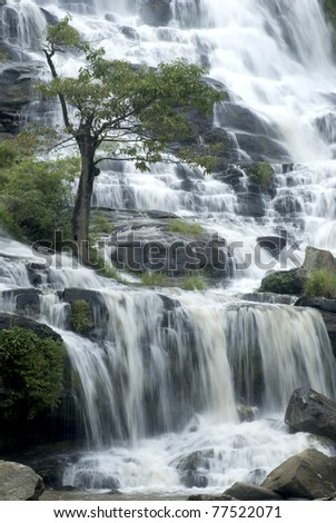Tree at Mae Ya waterfall in North of Thailand. - stock photo