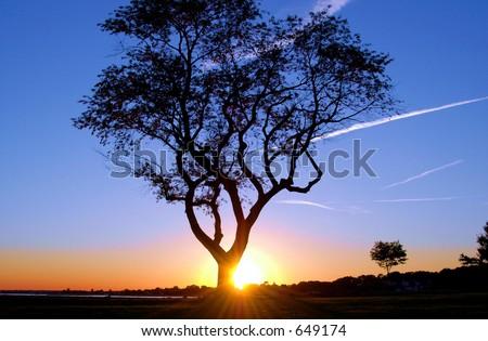 Tree at Sunset - stock photo