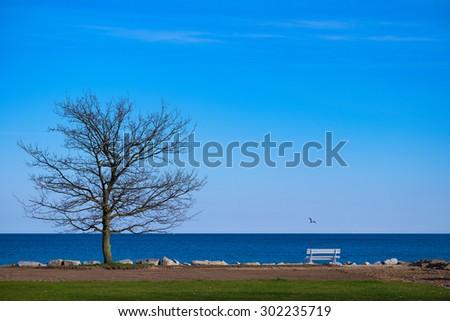 Tree at the coast - stock photo