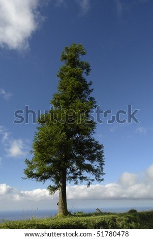tree at the coast in azores island of sao miguel - stock photo