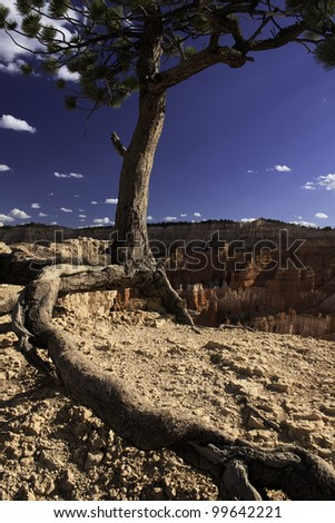 Tree atop a Desert Cliff - Bryce Canyon National Park