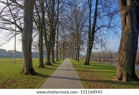 Tree avenue path, The Groe Builth Wells Wales UK. - stock photo
