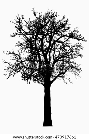 Tree - bare branches - black silhouette - on white background - isolated illustration