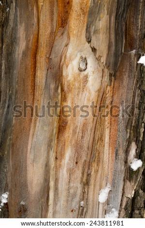 tree bark. - stock photo