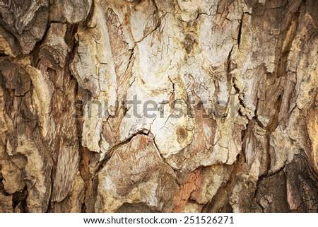 Tree bark abstract background. Retro style process.  - stock photo