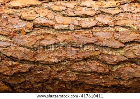 tree bark background, old bark, wooden bark, old tree bark, tree bark, tree bark photo, bark photo, pine bark, tree photo, forest tree bark, tree texture, bark texture, tree bark, tree bark texture - stock photo