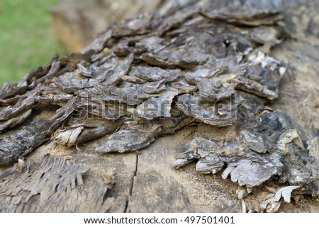Tree bark background / texture