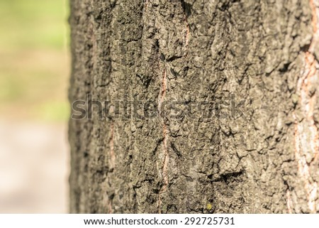 Tree Bark Background Texture Close Up - stock photo