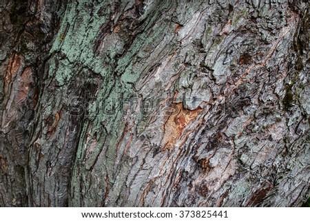 tree bark bent wave texture close up - stock photo