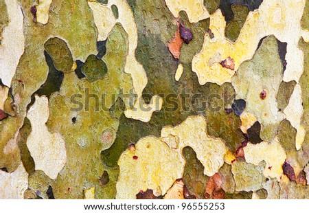 Tree bark, close up - stock photo