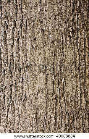 Tree bark details - stock photo