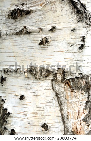 Tree bark. Details. Close up. Texture.