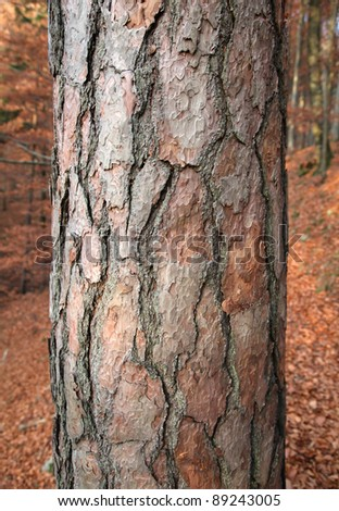 Tree bark in the forest - stock photo