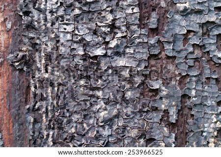 Tree Bark - Old and Rotten Tree Bark Texture - stock photo