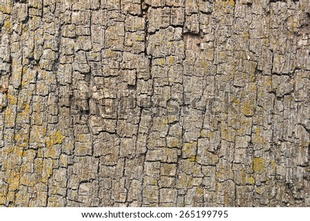 Tree bark surface from top view - stock photo