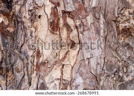 Tree bark texture. - stock photo