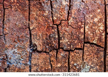 Tree bark texture - stock photo