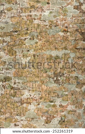 Tree bark texture and background surface - stock photo