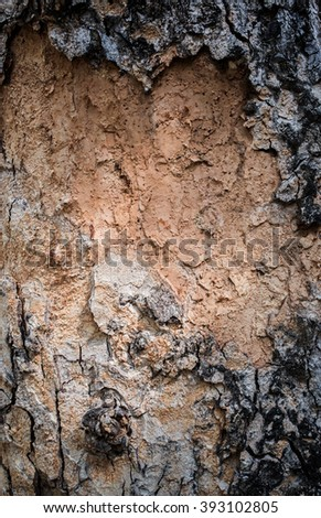 tree bark texture background - stock photo
