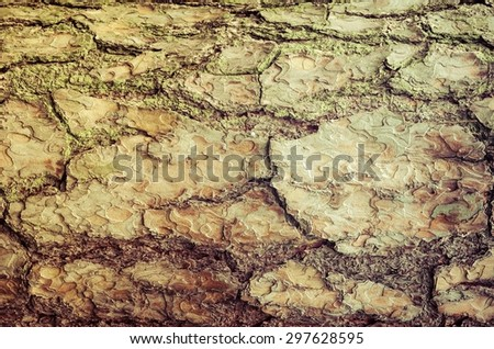 Tree bark texture. Close-up of old wood, may be used as a background. - stock photo