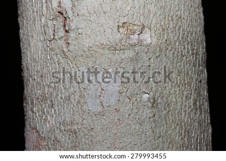 Tree bark texture in black background - stock photo