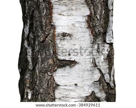 Tree bark texture isolated on white, birch wood background - stock photo