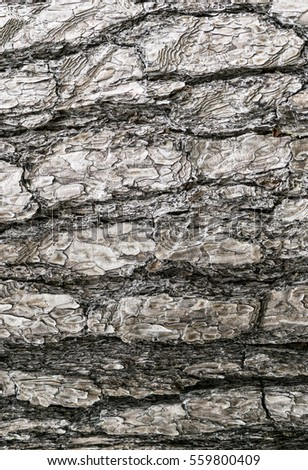 Tree bark texture. natural background wood surface