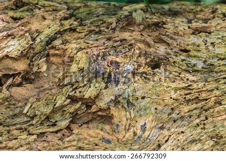 Tree bark texture, Old Wood Tree Texture Background Pattern - stock photo