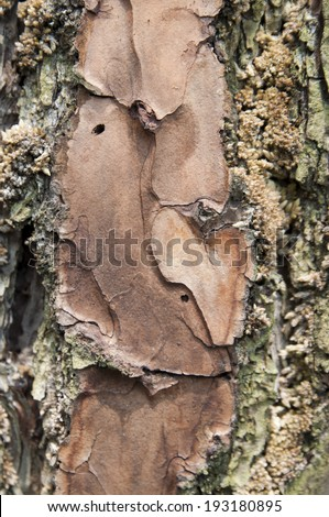tree bark texture, rotten, old, background.