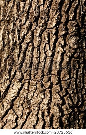 Tree bark texture (vertical) - stock photo