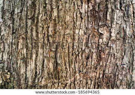 Tree bark texture wallpaper - stock photo