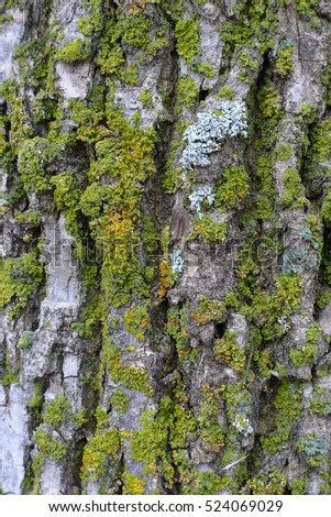 tree bark with green moss vertical