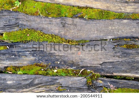tree bark with moss, abstract background, texture - stock photo