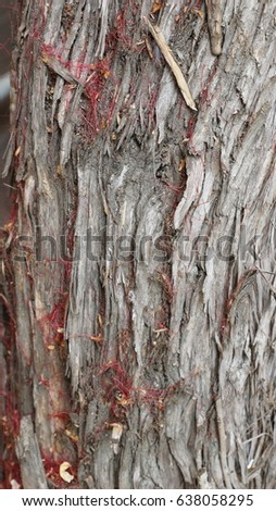 tree bark with some red flower peddles