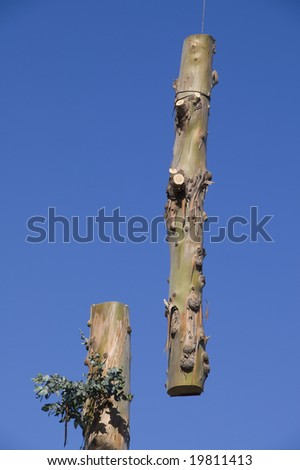Tree Being Trimmed - stock photo