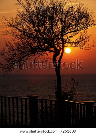 Tree black outline during sunset on the beach - stock photo