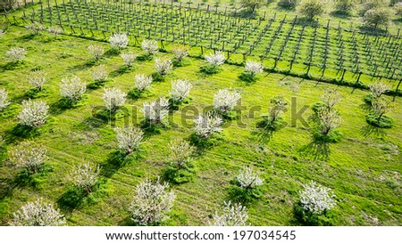 Tree blooming inside a green fields. Aerial photography - stock photo