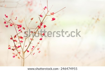 Tree blossoms - stock photo