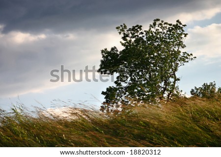 Tree blown by the wind - stock photo