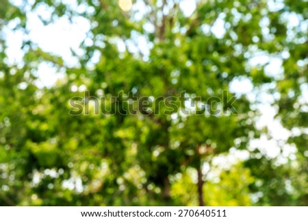 Tree bokeh blur background - stock photo