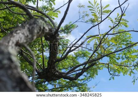 tree branch  - stock photo