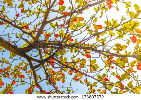 tree branch and leave on blue sky