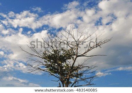 Tree branch background
