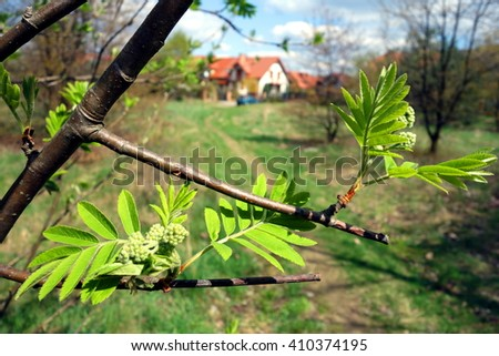 tree branch closeup and rural background